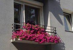 balkon_zwyciezca